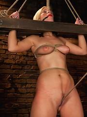 The Training of Tara Lynn Foxx